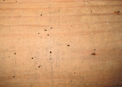 Evidence of historic woodworm which is no longer active and does not require treating.