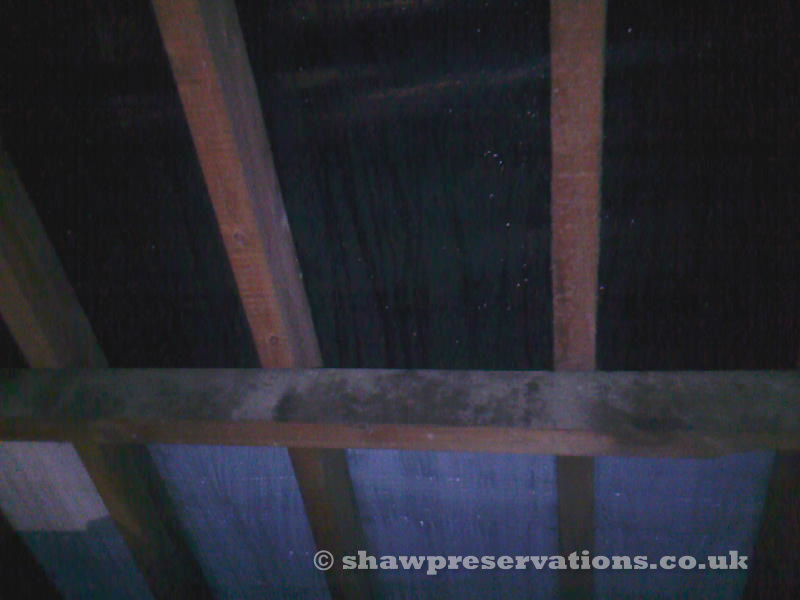 Condensation Mould forming on roof timbers.