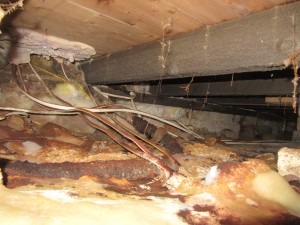 Damp and Timber Survey revealing severe Dry-Rot ( Serpula Lacrymans)